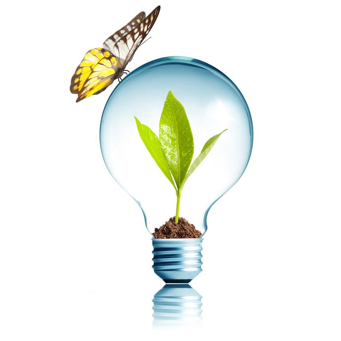 14473845 - plant glowing inside light bulb with butterfly